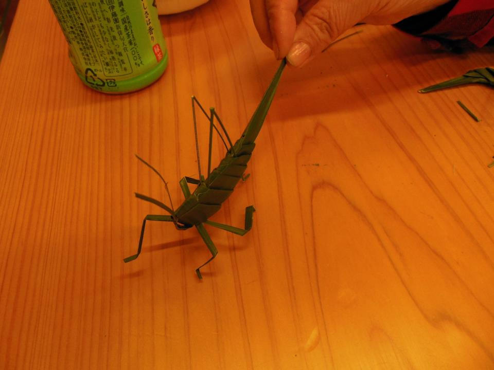 里山の昆虫
