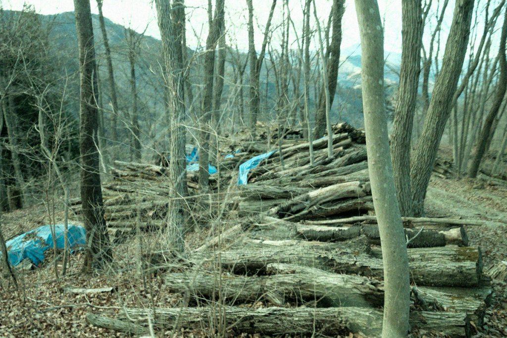 東京の森をたのしくまなぶ 森の映画鑑賞会