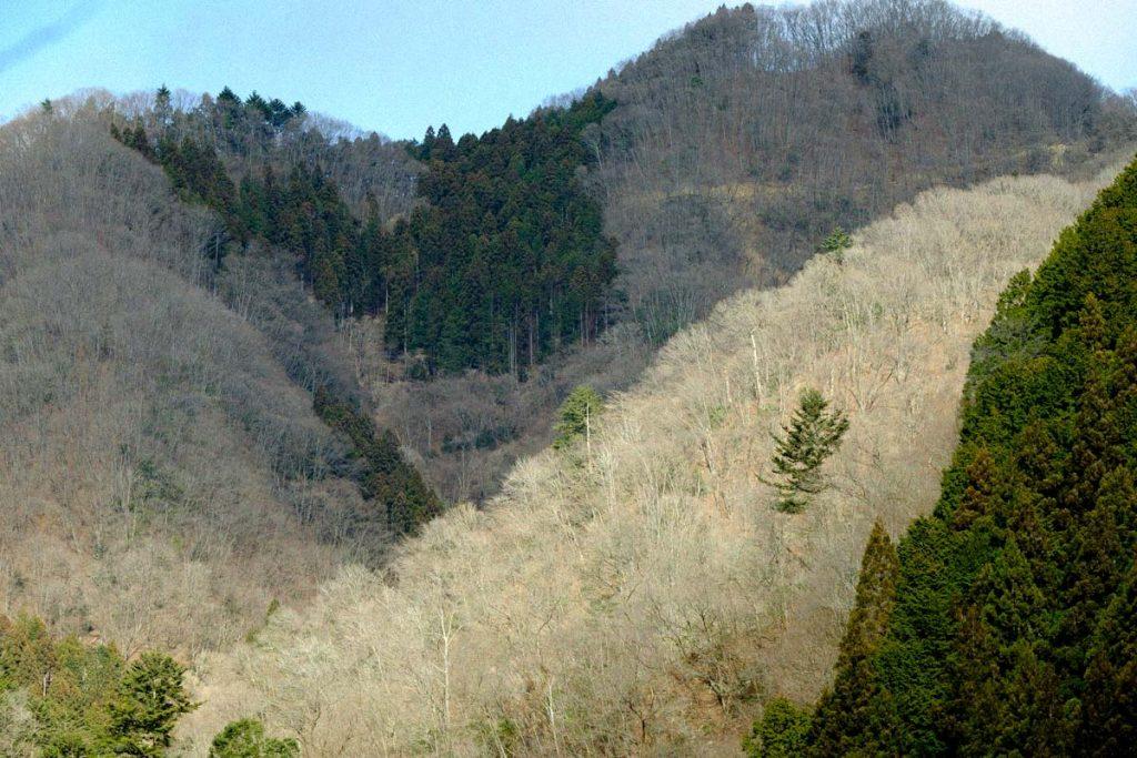 田中林業 FSCの森