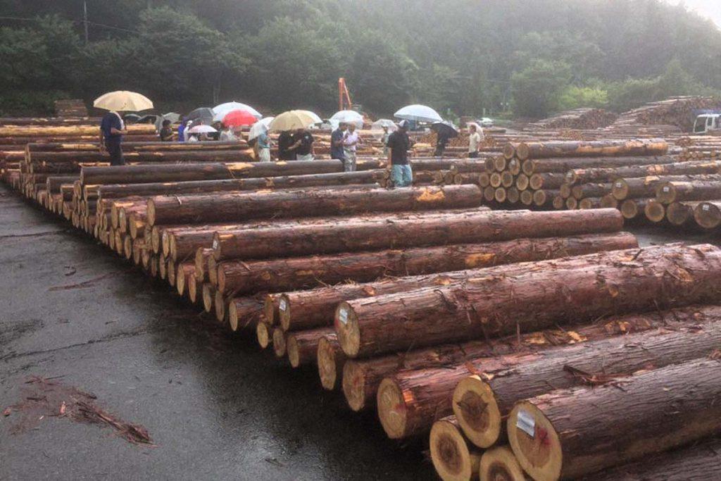 7月の原木市場