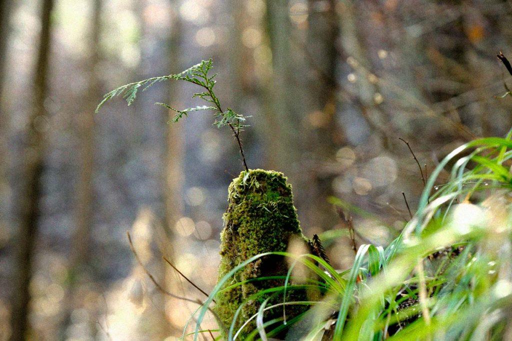 FSC 田中林業の森