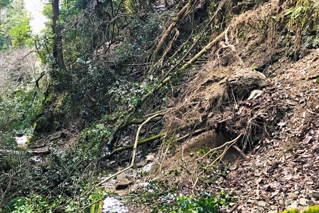 土砂災害を防ぐ森づくり
