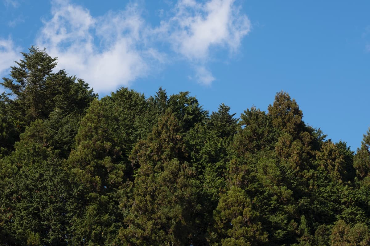 木は同じモノばかりじゃない
