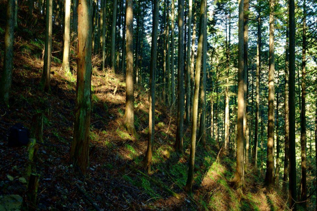 森の木が家になることの偉大さ